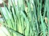 green_iris