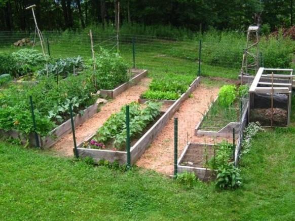 Fruit veg moygannon nurseries garden centre for Fruit and vegetable garden