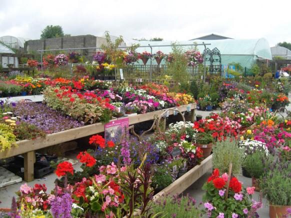 Plants Moygannon Nurseries Garden Centre