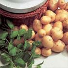 Mint – Lamb, Potatoes etc