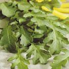 Rocket - Salads & Cooking