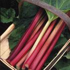 Rhubarb–Timperley Early