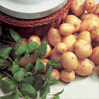 Mint – Lamb, Potatoes etc